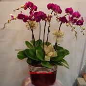 cfg009.jpg - orchids delivery to China