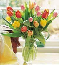 Pershendetje me nje lule per nje anëtarë? - Faqe 6 10147a