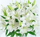china flowers delivery send florists to Beijing,Shanghai,Shenzhen guangzhou China